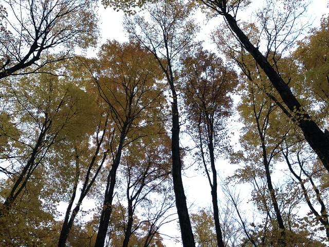トロントの森