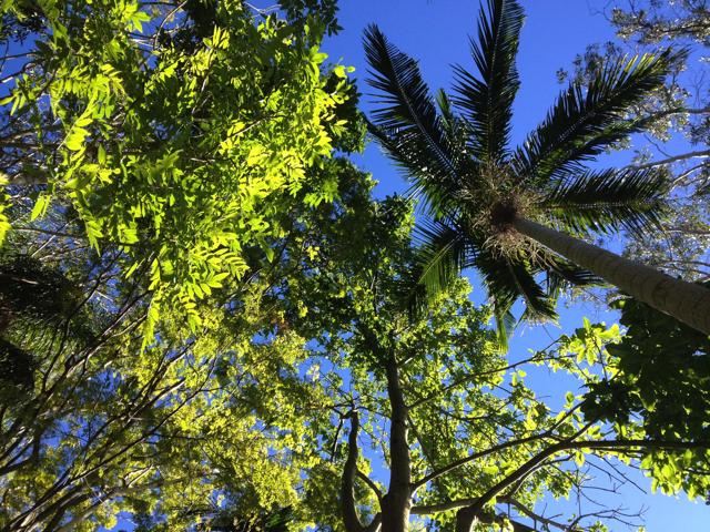 青い空と木